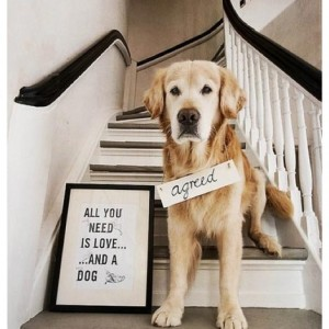 funny-animals-with-sayings-all-you-need-is-love-and-a-dog-agreed-funny-quote-with-labrador-300x300